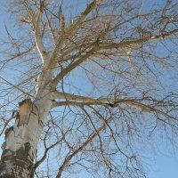 Деревья :: Екатерина Зубенко