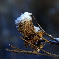 зима :: эндрю грек