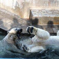 люди и медведи :: liudmila drake