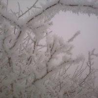 зима :: МИХАИЛ КАТАРЖИН
