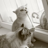 Кошки с элементами мышления :: Veronika Chernyshova