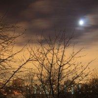 Лунный свет :: Aнна Зарубина