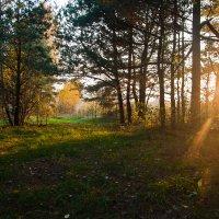 солнечный луч :: Наталья Манусова
