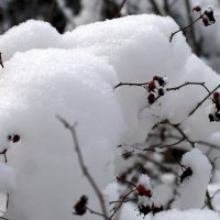 Снежное одеяло... :: ФотоЛюбка *