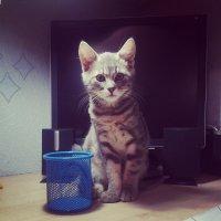 Мой кот Айк :: Настя Настя