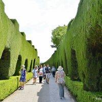Крепостные стены в Альгамбре, только мягкие и пушистые. Гранада. Испания. :: Виталий Половинко