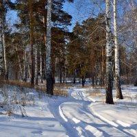 Февральский пейзаж. :: Сергей Адигамов