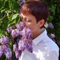 Люблю когда цветет сирень! :: Евгения Латунская