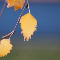 Осень... :: Edita Rimkute