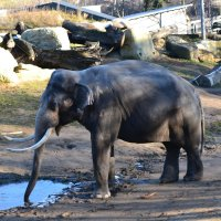 Слон :: ALENA LEONOVA