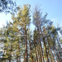 Осенний лес :: SVetlana Muldasheva