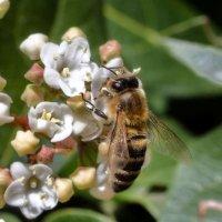 суровые февральские пчелы. :: Николай Ковтун