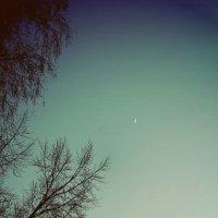 луна :: Катерина Лячок