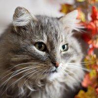 Просто кот :: Виктор Sheldyaev