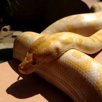 snake :: Роман Сидоровъ