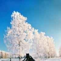 Зимняя дорога :: Валерий Талашов