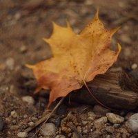 Осень :: Ольга Капустина