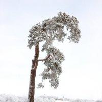 Уединение в снегах :: Евгений Никифоров