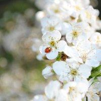 краски весны :: Екатерина Юрова