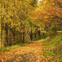 Осень в Толстовском парке :: Наталья Цветкова