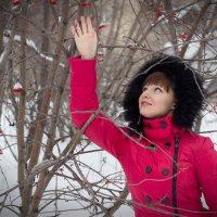 немного зимы..... :: Елена Черновская