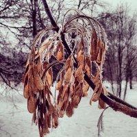 Замерзшее утро :: Victoria Kurzina