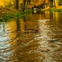 Сутками в воде :: Григорий Храмов