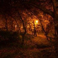 Осень в разгаре :: Анна Бутрина