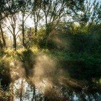 Утро на пруду :: Олег Сидорин