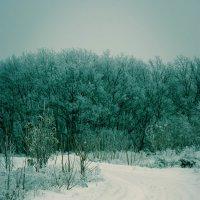 А у нас зима :: Владимир Коптев