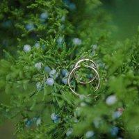 wedding_rings :: Светлана Богомолова