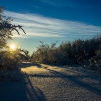 Морозное солнышко :: Денис Антонов