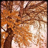 Осень :: Николай Заборовский