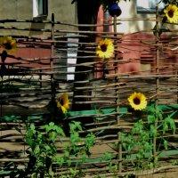 Люди стремятся переехать в город, а живя в городе пытаются хоть что то, воссоздать :: Ольга Кривых