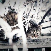 Снеговик :: Анастасия Macintosh
