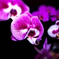 орхидея :: Александр Максимов