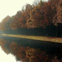краски осени :: Maria Shakhova