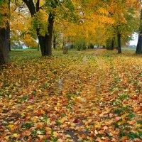 Золотая осень :: Лариса Кайченкова