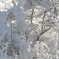 Холодный свет :: Юрий Цыплятников