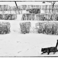 зима :: алексей коза