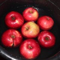 Яблоки в ведре :: Эльвира Валиева