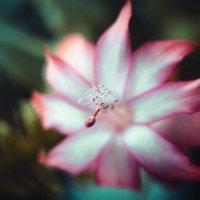Цветок :: Полина Соколова