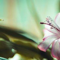 Flower :: Полина Соколова