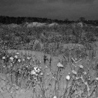 Зима дорога вечером к лесу Кузьминский (Люберецкий район) :: Ольга Кривых