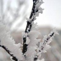 Зима художница :: Светлана Гугис