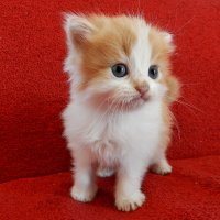 Я маленький котенок :: Петр Заровнев