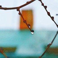 Капли зимнего дождя :: Игорь Попов