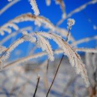 Мороз и солнце... :: Андрей Куприянов