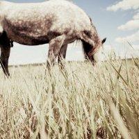 Лошадь :: Анна Чижова