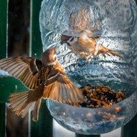 Бои без правил в птичьем мире... :: Елена Elena